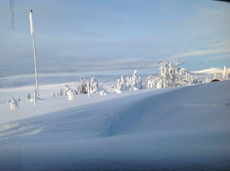 Vinterkledd Elgåsen