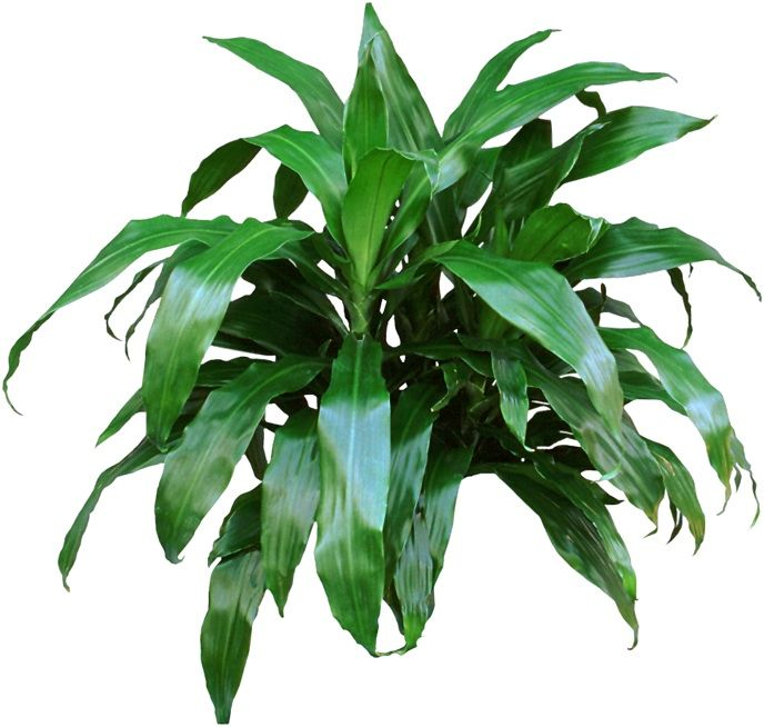find this pin and more on low light houseplants - Houseplants For Low Light