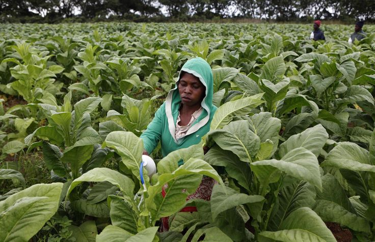 Why Zimbabwe has failed to sate the yearning for land and to fix rural hunger