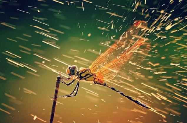 La tradicional asociación de libélulas con el agua también da origen al significado de este increíble insecto. El vuelo de la libélula corriendo a través del agua representa un acto de ir más allá de lo que está en la superficie y busca en las implicaciones más profundas y los aspectos de la vida.