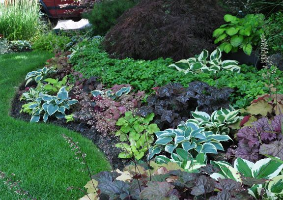 This homeowner has mixed different colored heuchera and hostas in a way that I haven t quite seen before. Though there isn't that much in flower, it is still colorful.