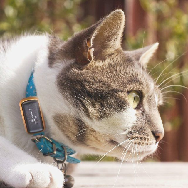Best GPS Images On Pinterest For Kids Wearable Technology - Gps trackers reveal the crazy distance our cats walk when they go out at night