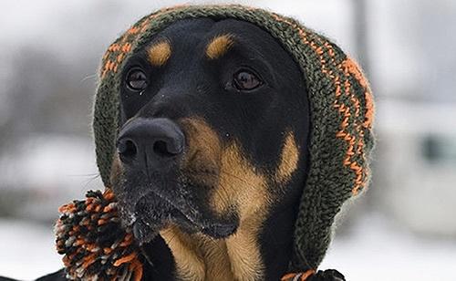 Kutya egészség, kutyatartás, kutyabetegség, örökbefogadás – Startlap.hu Kutyavilág rovat - Startlap Kutyavilág rovat