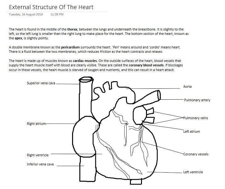 External structure of the heart https://studylikeageek.wordpress.com/