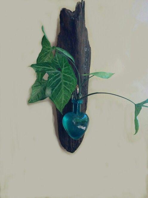 Lindo Corazón colgante con planta