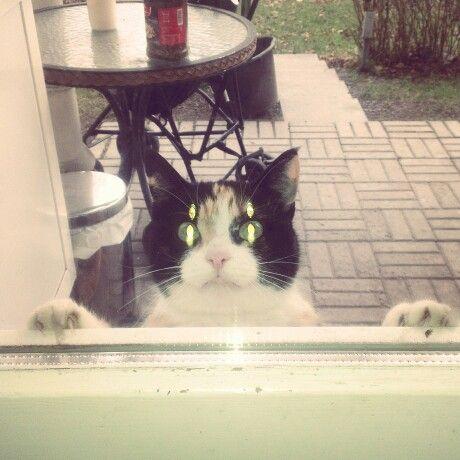 Naapurin kissa