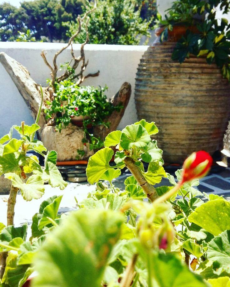 Garden... www.angelosalonissos.com  #angelos_apartments #alonissos #sporades #greece #greekislands #summer2017 #accommodation #hospitality