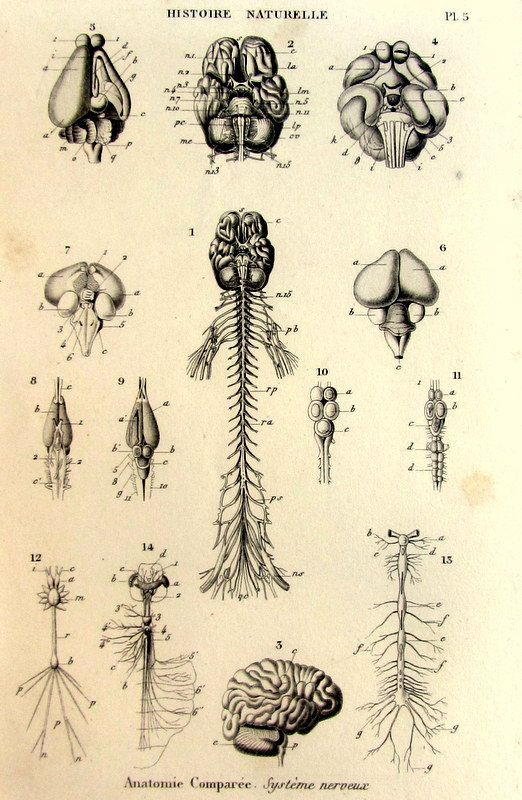 1852 antique oddity dissection animals by LyraNebulaPrints on Etsy, $23.95