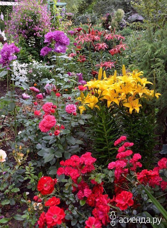 Всё о лилиях сорта виды описание фото условия