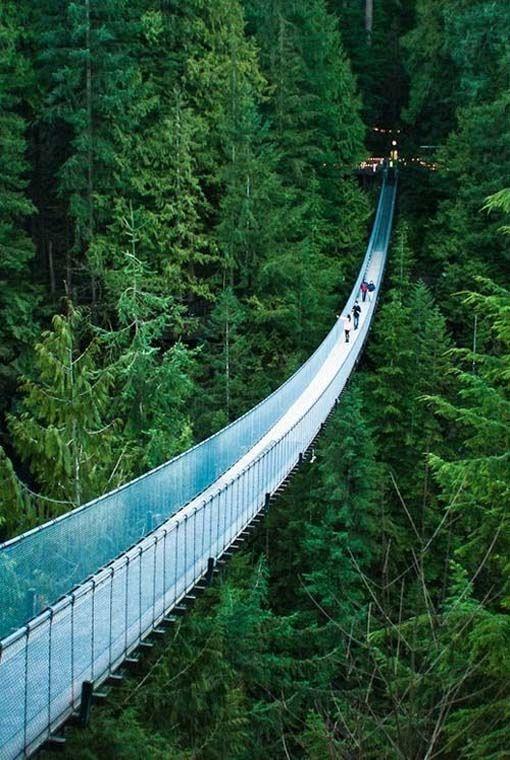 Suspension Bridge Park In Canada