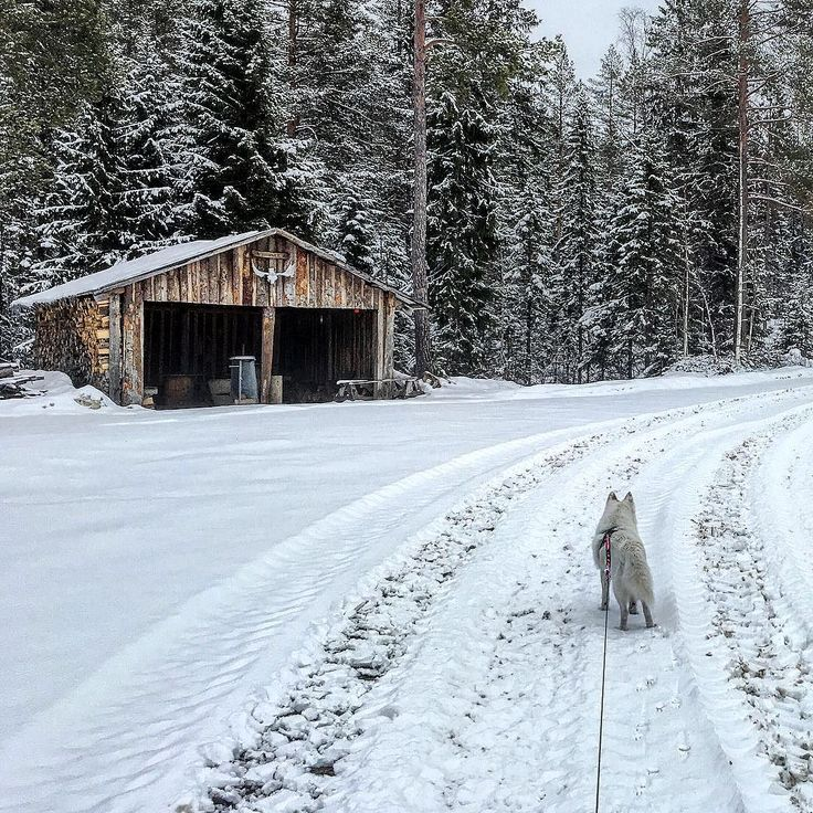 medelpad#sundsvall#bergom#matforsbygden#matfors##besökare#stuga#hus#road#landsbygd#marmen#tuna#tunabygden#långsjön#östralångsjön#sjögräs#vass#vinter#långsjön#lake#jakt#jakttorn#jaktstuga#hunt# by jessicasupermamsen