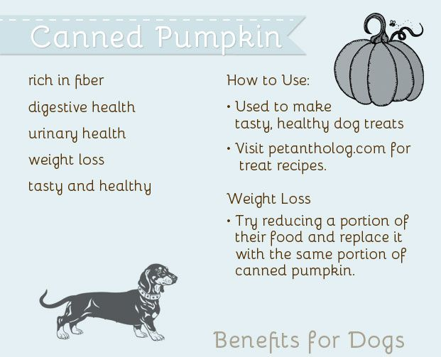 The Pet Anthology   Health Benefits of Canned Pumpkin - Rich in fiber and helps with weight loss #pumpkin #dogs