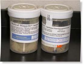 Maggot Therapy