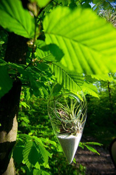 Into the wild, with airplant terrariums. www.facebook.com/aerium.ro