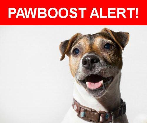 Please spread the word! Pepper Ann was last seen in San Antonio, TX 78217.    Nearest Address: Near Oakhaven St & Overton Rd
