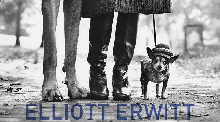 Elliott Erwitt - Icons #Iloveideas #Sangimignano #Erwitt