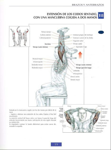 tricep heads and how to work them
