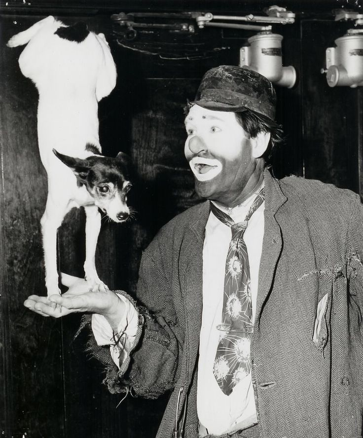 Clownin' Around ~ Rat terriers are known for athleticism as well as a wonderful sense of play!