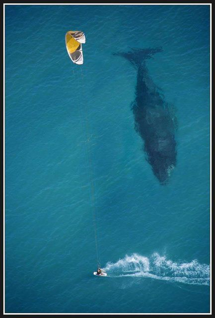 Kite surf with a whale