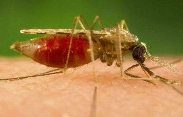 Malaria cure breakthrough: a protein may cure the disease completely et healthworld