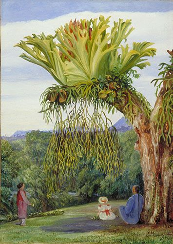 Kew: Marianne North Gallery: Painting 598: Stagshorn Fern, and theYoung Rajah of Sarawak, with Chinese Attendant