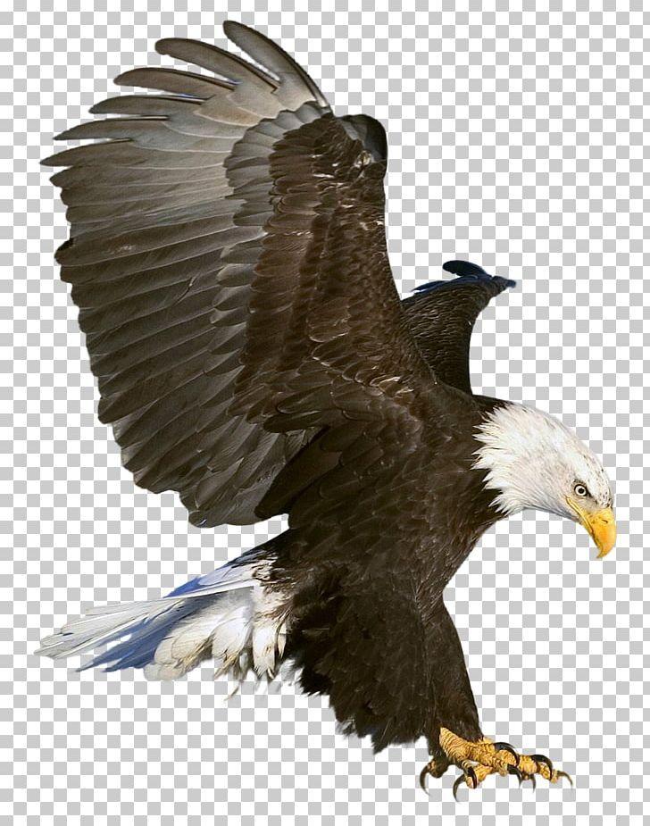 Bald Eagle Png Eagle Background Black Background Images Background Images Hd