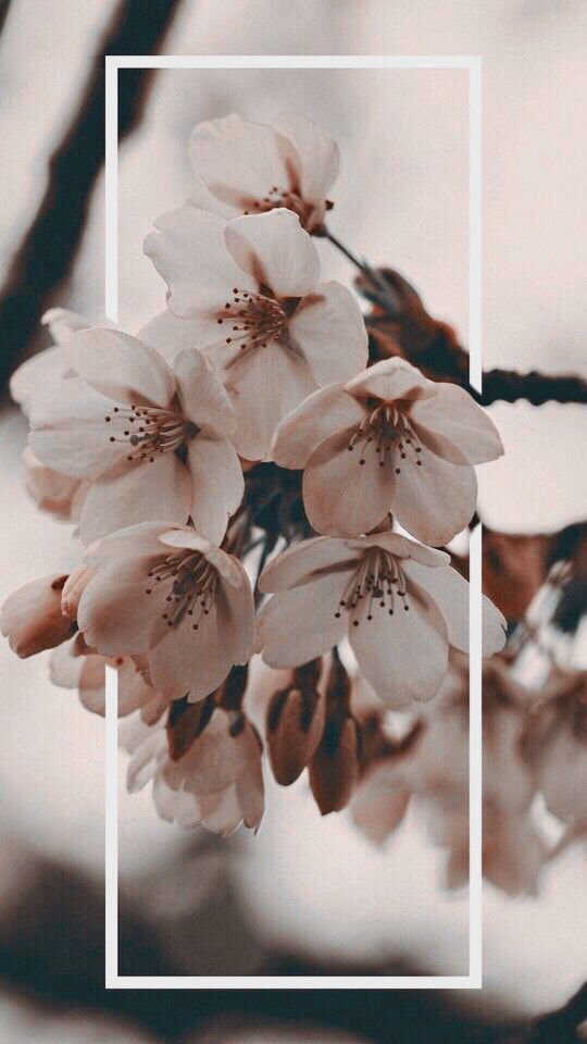 #wallpaper #floral #aesthetic