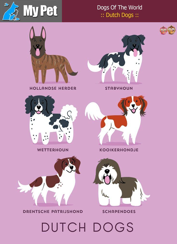 :: Dutch Dogs ::  From THE NETHERLANDS: Hollandse Herder (Dutch Shepherd), Stabyhoun, Wetterhoun (Frisian Water Dog), Kooikerhondje, Drentsche Patrijshond (Dutch Partridge Dog), Schapendoes.  #MrbigninkPage #KunLhingJingleBell