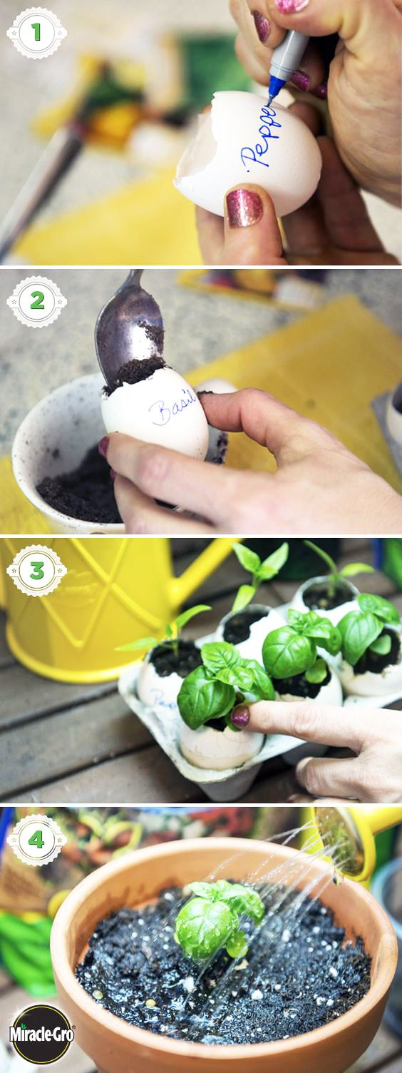 Learn how to grow your own seeds indoors using eggshells in this simple