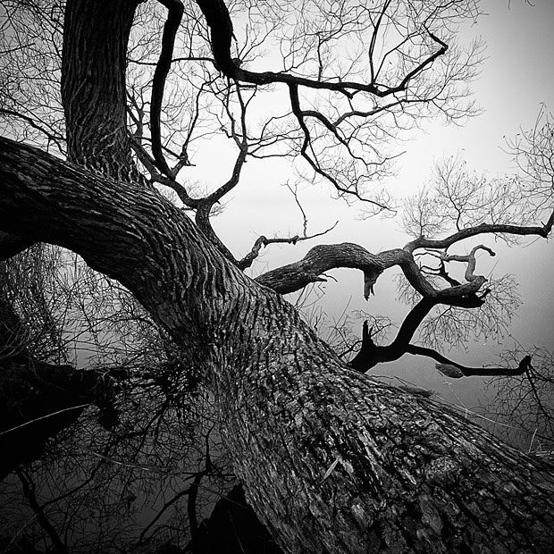 Twisted-Tree-Vallentuna-Sweden