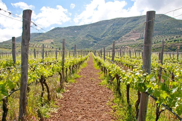 Manousakis Winery Vineyards  Crete, Greece  www.nostoswines.com
