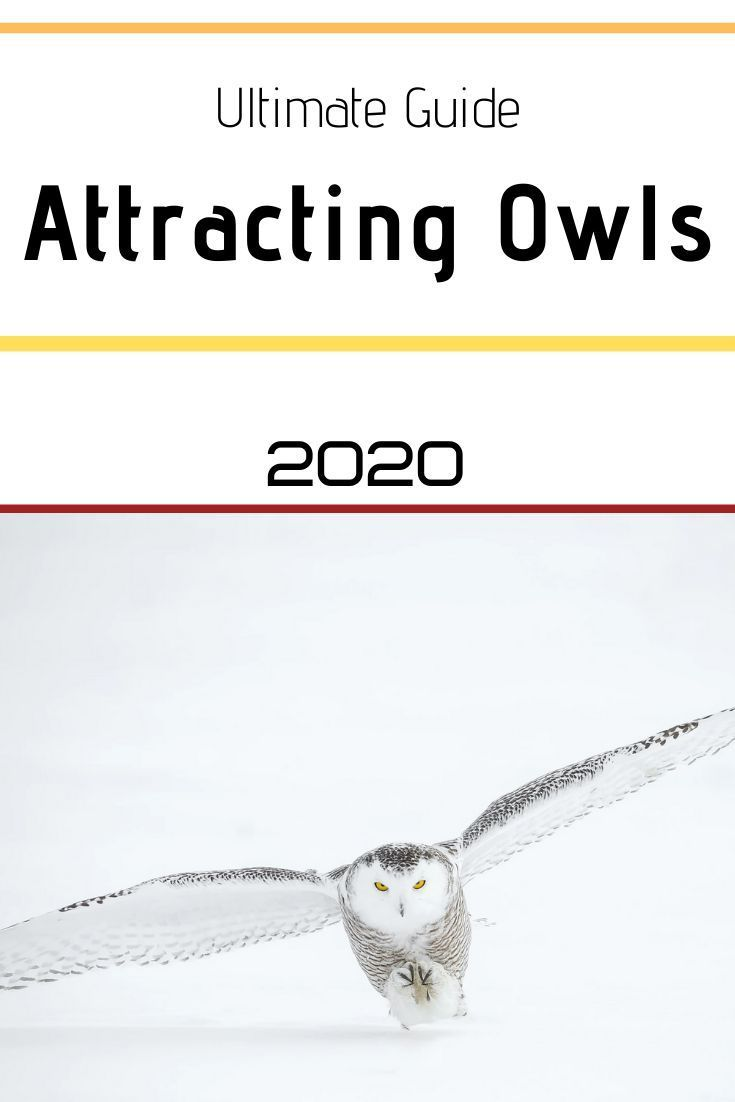 Top Tips On Attracting Owls To Your Yard Attracting Owls Tips Top Yard Attract Wild Birds Annual Plants Owl