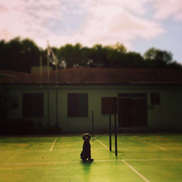 Mumm #puppy #instacorgi #corgi #corgidog #corgigrrr #corgilove #corgicrazy #corgifamily #corgination #corgistagram #corgioftheday #corgicommunity #corgisofinstagram #dailydog #dogstagram #dogsofinstagram #petstagram #petsofinstagram #pembrokewelshcorgi #welshcorgi #statigram #buzzfeed #tastyshoutouts #puppyoftheday #dogoftheday #instagramcorgis#naver #weimaraner #google #nate #petphotography #peto #dog #pet #weim #pinterest #애완동물 #반려동물 #반려견 #애견 #와이마라너 #바이마라너 #독일사냥개 #웰시코기 #코기