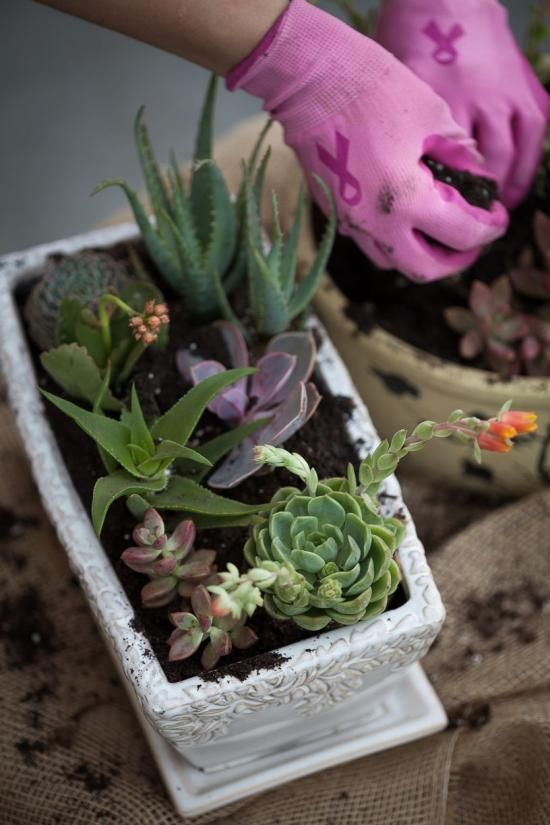 One reason that succulents have become  a runaway trend, aside from their variety of  forms, textures and colors, is the ease of theier care. #DIHWorkshop