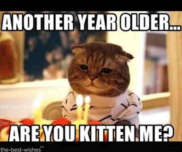 Top 100 Funniest Happy Birthday Memes Most Popular Happy Birthday Funny Funny Happy Birthday Meme Happy Birthday Cat