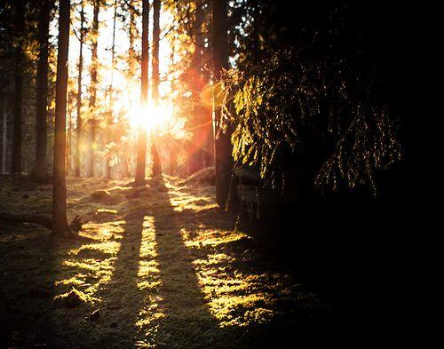 Sweden, Smaland woods