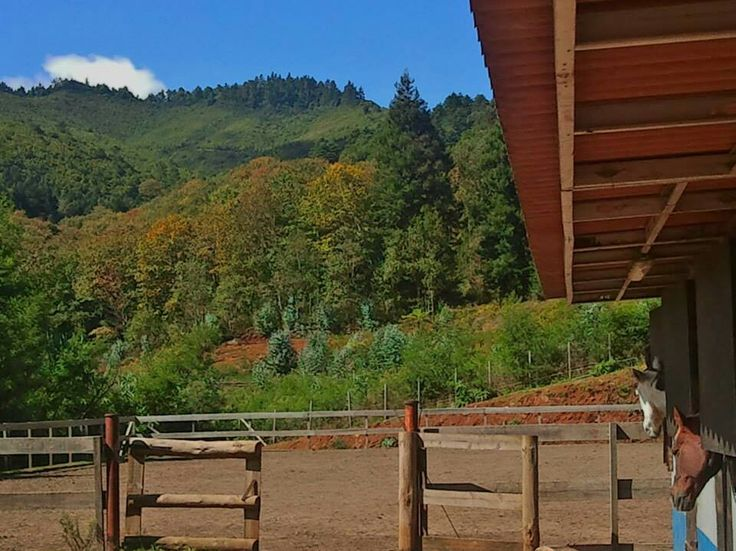 Autumn is coming! #madeira #stable #horse #pferd #cheval #stabil