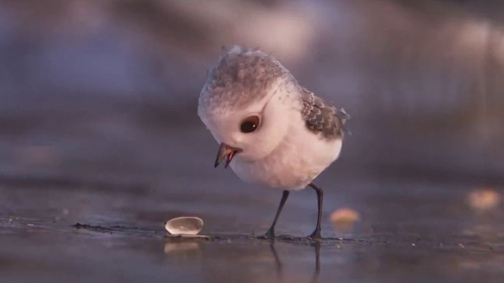 Piper New Pixar Animated Short