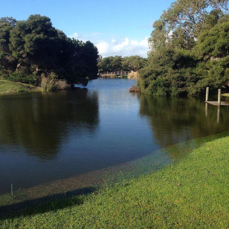 Lots of water at Lake Pertobe. #Warrnambool #love3280 #destinationwarrnambool #lakepertobe #water #nature by vegpatch47