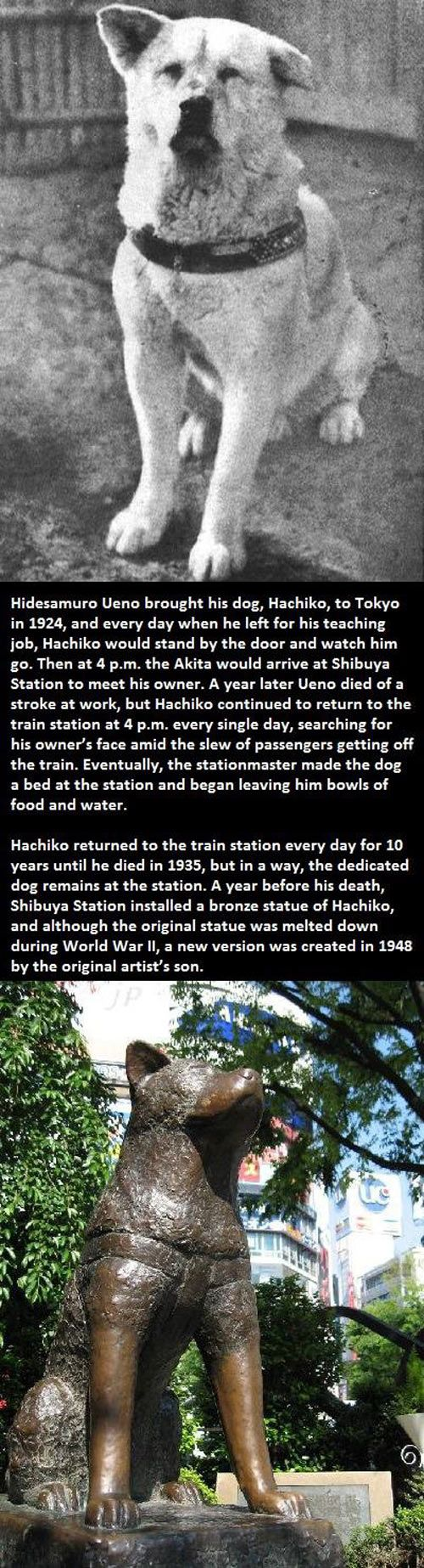 Most loyal dog in the world… Netflix had the movie based on him once, called Hatchi.  I watched it three times.  Ran though a box or two of tissue.