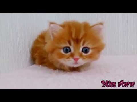 Funny Animal Videos for Kids Cute Kitten Compilation Funny