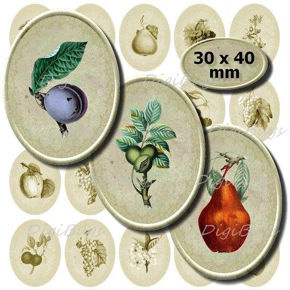 Vintage Fruit Illustrations - Digital Collage Sheet 30 x 40 mm Ovals, Printable File, Instant Download b8