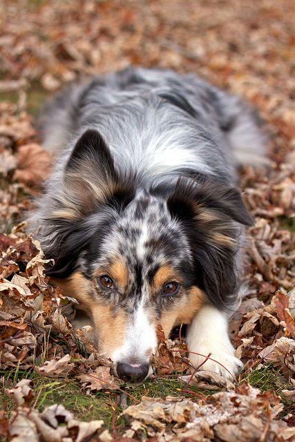 Ik ben geen fan van honden maar dit is echt een cutie!