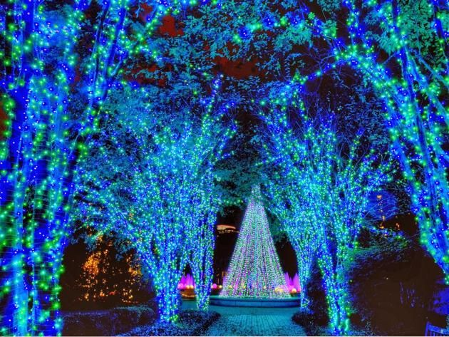 625 best Christmas Lights 2 images on Pinterest | Christmas lights ...