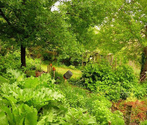 Rhubarb Companion Plants: Raspberries, Rhubarb, Horseradish, Sage, Mint