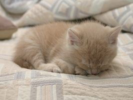 How to Get Rid of Fleas on Young Kittens Newborn kittens