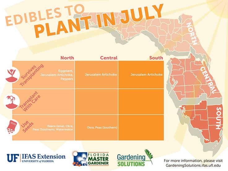 July summer vegetables to plant in north central and - South florida vegetable gardening ...