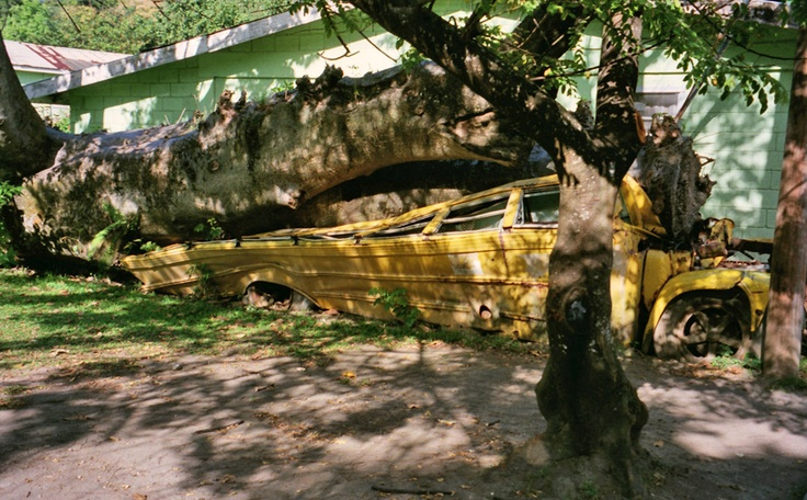 Hurricane DAVID damage  In 1979, Dominica was hit directly by category 5 Hurricane David, causing widespread and extreme damage. On August 17, 2007, Hurricane Dean, a category 1 at the time, hit the island. A mother and her seven-year-old son died when a landslide caused by the heavy rains fell onto their house. In another incident two people were injured when a tree fell on their house. Prime Minister Roosevelt Skerrit estimated that 100 to 125 homes were damaged.