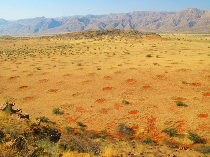 Fly from Angola down to South Africa and you'll see thousands of circles of bare dirt covering the land. They're up to 30 feet across and ringed by tufts of grass. The origin of the shapes has long been a mystery, but researchers now say hordes of termites may be acting as engineers.