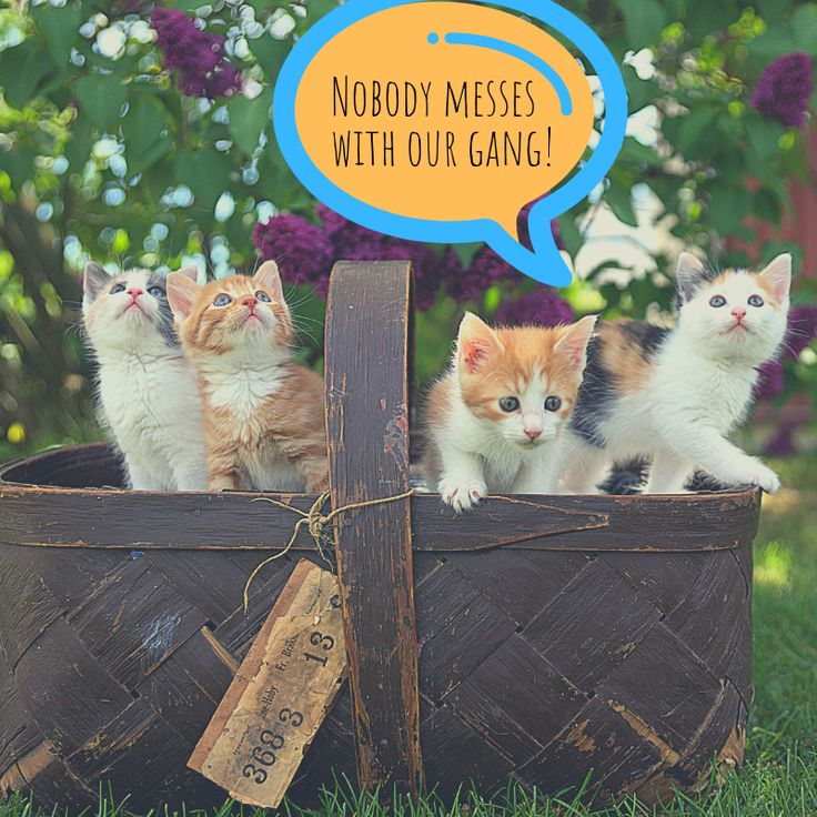 Esa letter emotional support animal group of cats